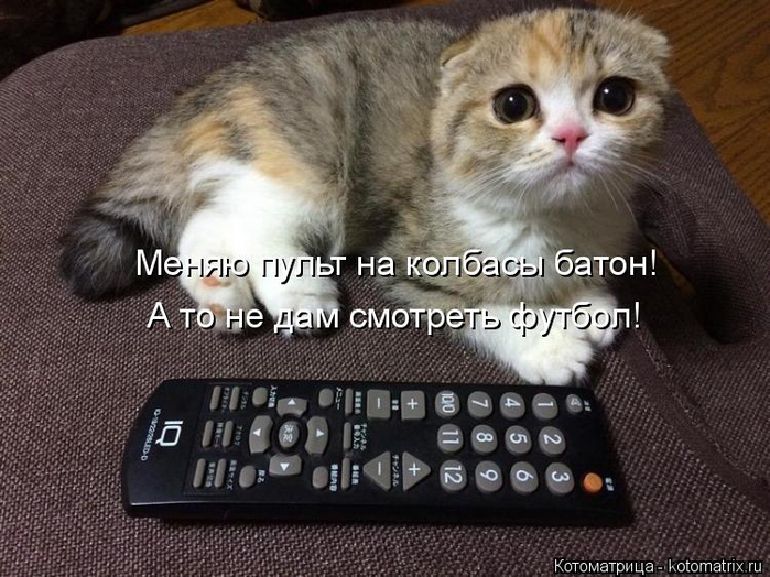 kotomatritsa_N3 (700x524, 343Kb)
