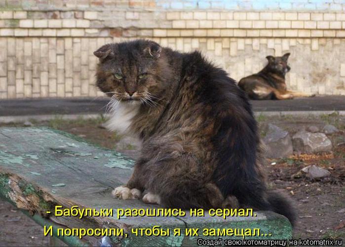 kotomatritsa_p (700x501, 370Kb)