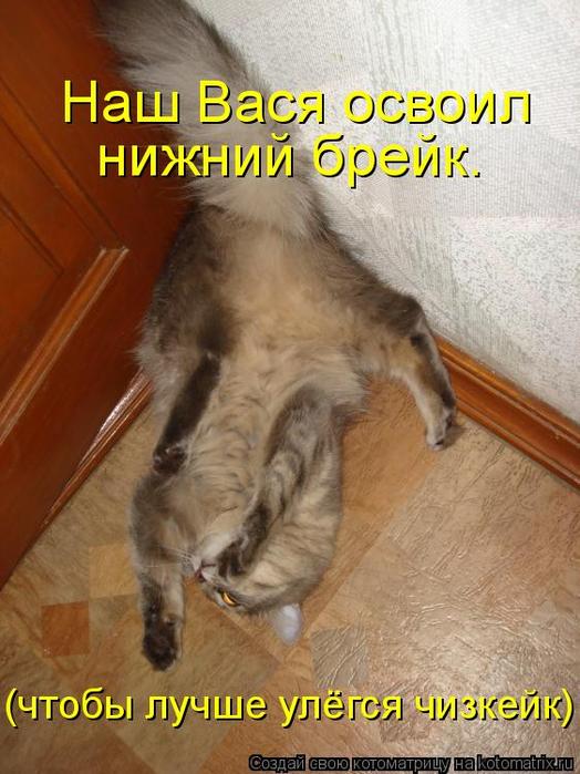 kotomatritsa_Z (524x700, 368Kb)