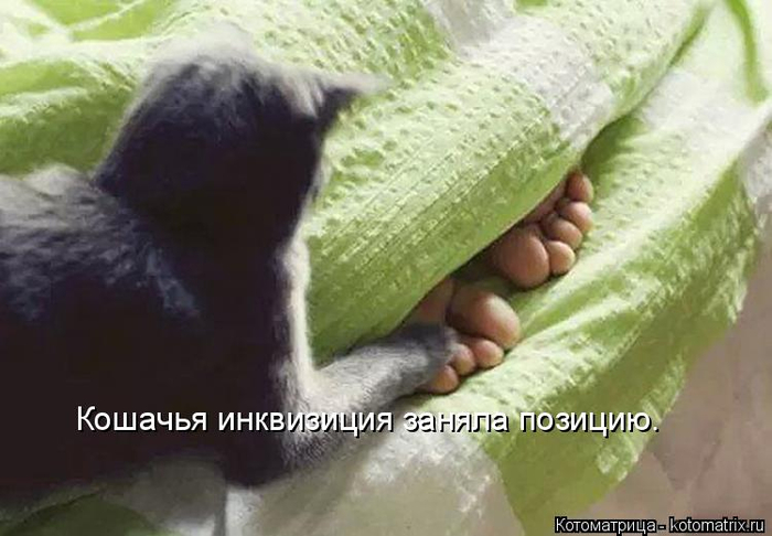 kotomatritsa_8L (700x486, 255Kb)