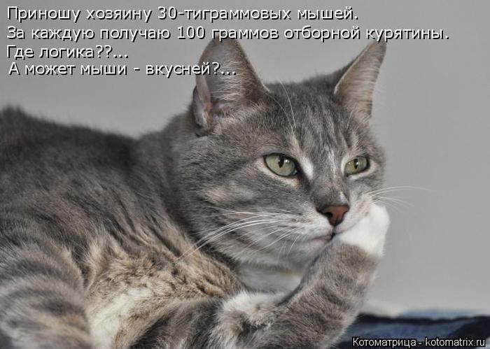 kotomatritsa_f (700x499, 240Kb)
