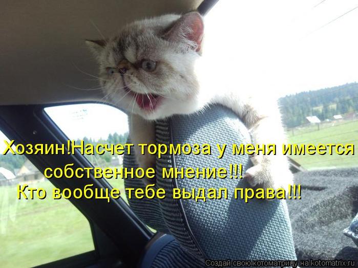 kotomatritsa_P (700x524, 339Kb)