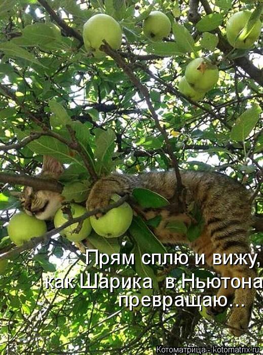 kotomatritsa_x (519x700, 380Kb)