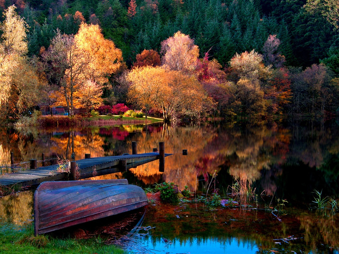 The-autumn-lake-forest-morning_1024x768 (700x525, 599Kb)