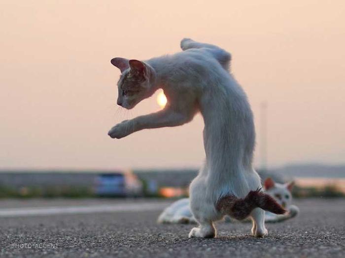 ninja-cats_002 (700x525, 166Kb)