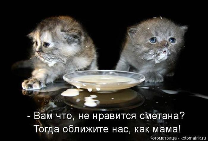 kotomatritsa_- (700x475, 192Kb)