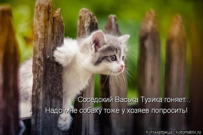 kotomatritsa_4 (700x466, 262Kb)