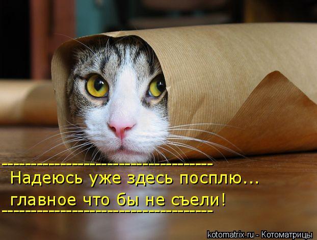 kotomatritsa_O (1) (622x471, 218Kb)