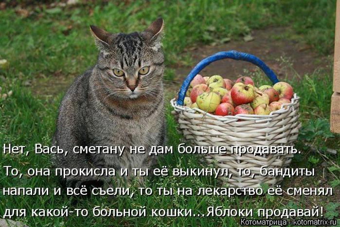 kotomatritsa_O (700x466, 428Kb)