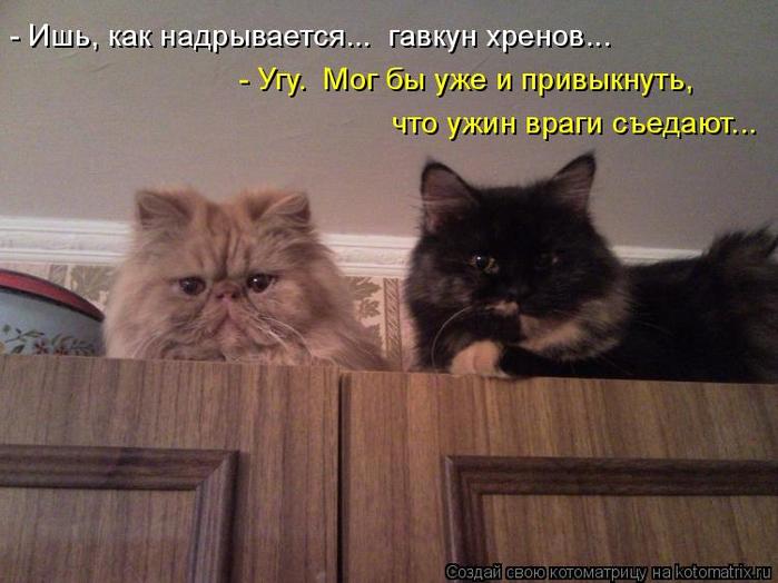 kotomatritsa_Pj (700x524, 336Kb)