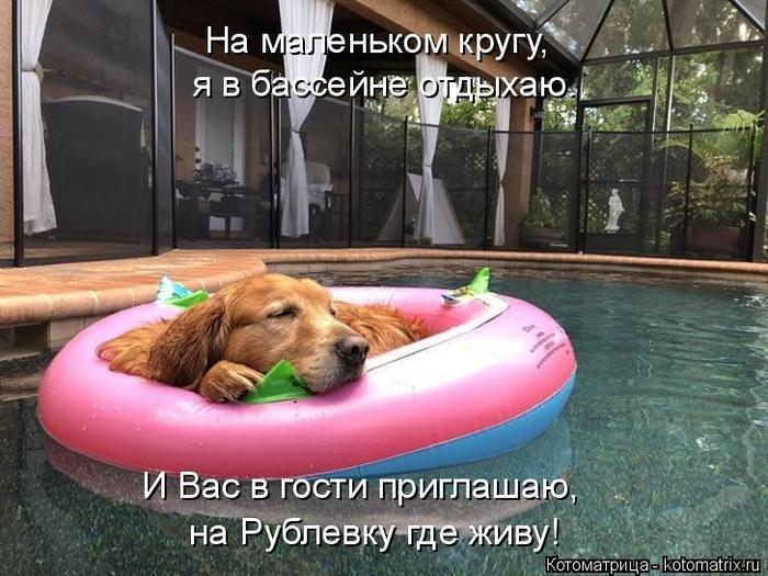 kotomatritsa_Y (700x525, 381Kb)