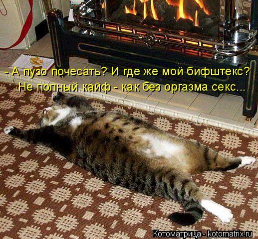 kotomatritsa_E (517x480, 292Kb)