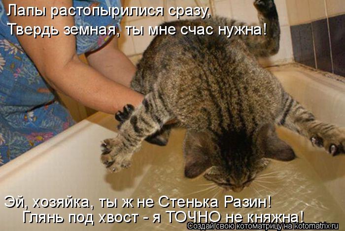 kotomatritsa_p (700x469, 268Kb)