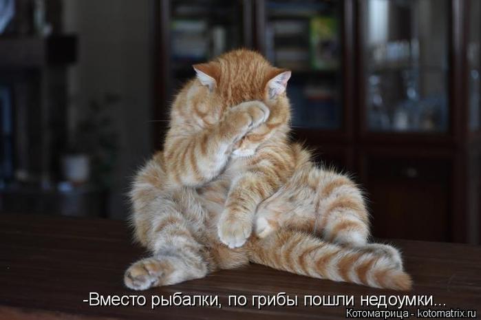 kotomatritsa_S (700x465, 224Kb)