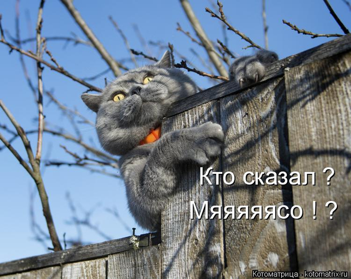 kotomatritsa_y (700x557, 390Kb)