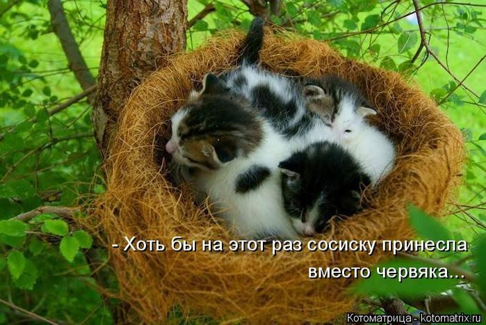 5402287_stimka_ru_kotomatritsa_tr (700x467, 72Kb)