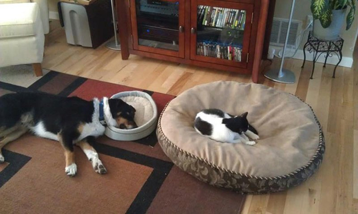 20-pictures-proving-that-cats-are-jerks-10 (700x419, 256Kb)
