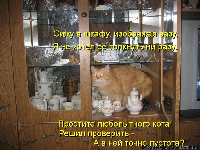 kotomatritsa_4 (700x524, 426Kb)