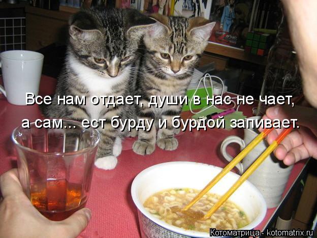 kotomatritsa_M (624x468, 225Kb)