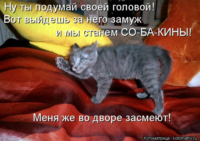 kotomatritsa_T (700x491, 387Kb)