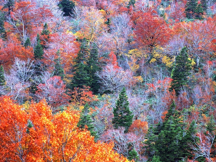 trees_autumn_top_view_91045_1400x1050 (700x525, 349Kb)