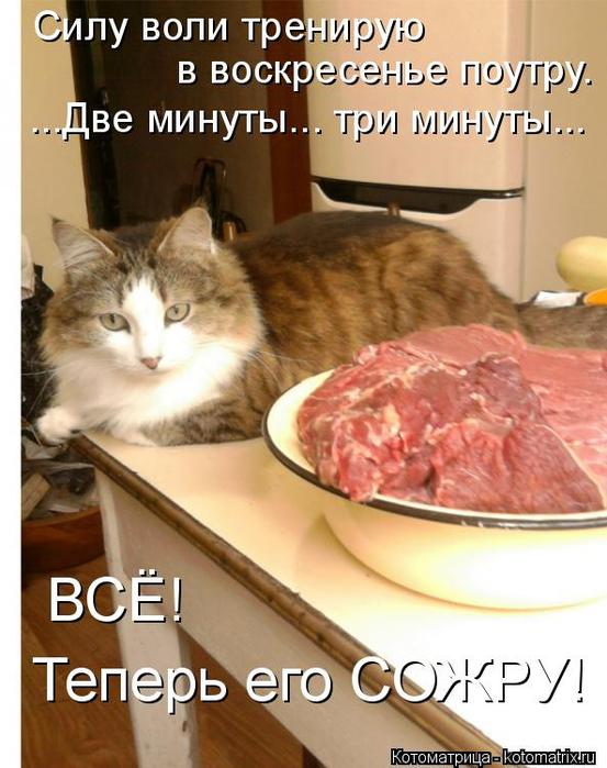 kotomatritsa_r (553x700, 370Kb)