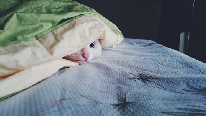 kitty-1785031_960_720 (700x393, 228Kb)