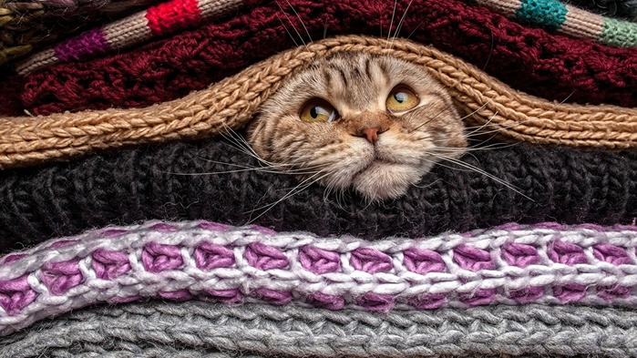 Cats_Snout_Sweater_489509_1366x768 (700x393, 169Kb)