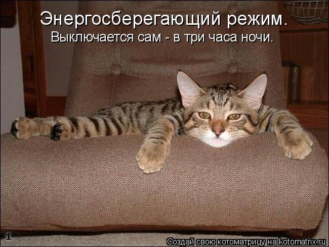 kotomatritsa__ (650x488, 214Kb)