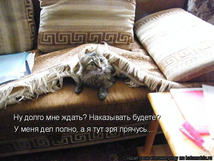 kotomatritsa_7 (700x524, 365Kb)