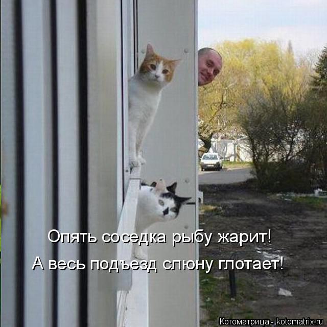 kotomatritsa_FF (640x640, 187Kb)