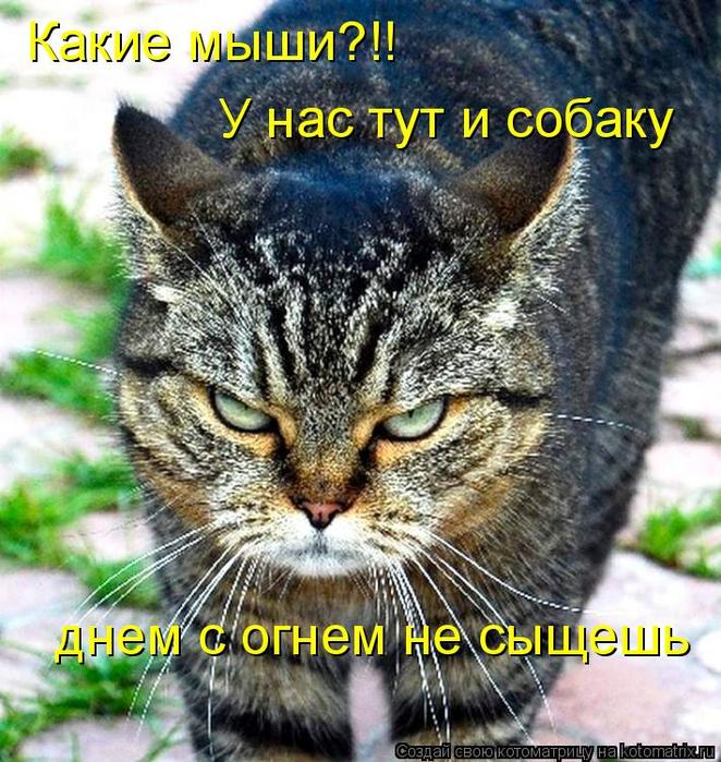 kotomatritsa_o (662x700, 555Kb)