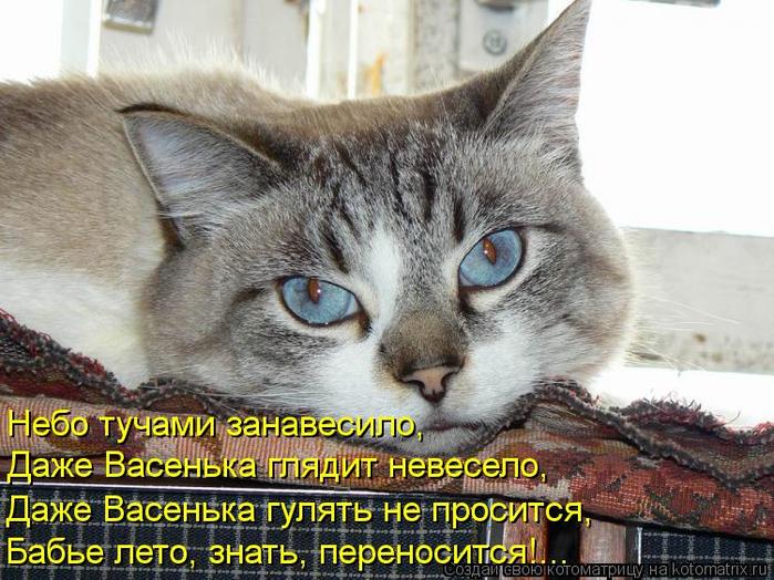 kotomatritsa_4 (700x524, 411Kb)