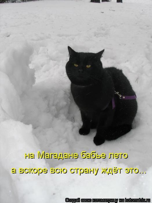 kotomatritsa_D (524x700, 194Kb)