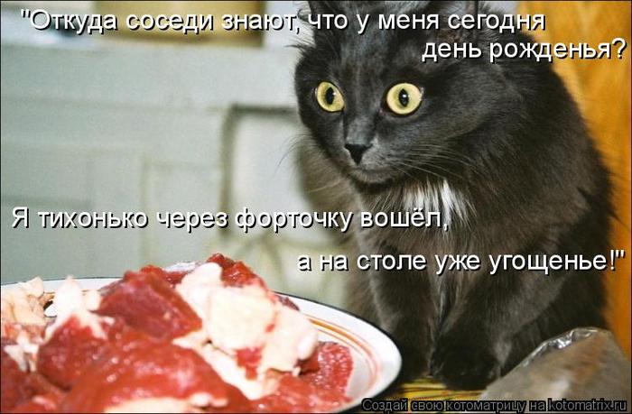 kotomatritsa_T (700x459, 316Kb)