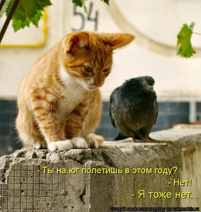 kotomatritsa_W (663x700, 436Kb)