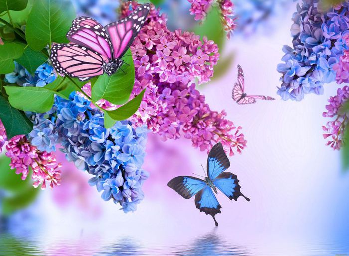 Insects-Butterflies-Lilac-Animals-Flowers-butterfly_4000x2939 (700x514, 76Kb)