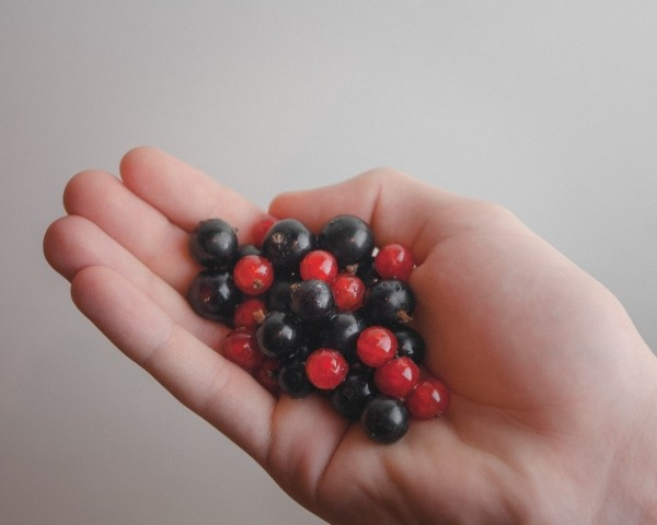 6029120_foodfruitscurrantsblackcurrants (600x480, 39Kb)