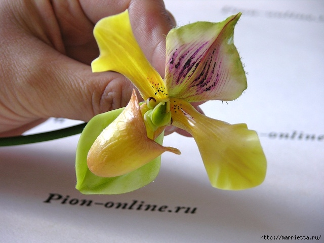 Орхидея Леди Слиппер из полимерной глины. Мастер-класс (68) (640x480, 160Kb)