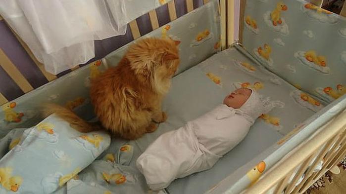 кот и малыш (700x393, 82Kb)