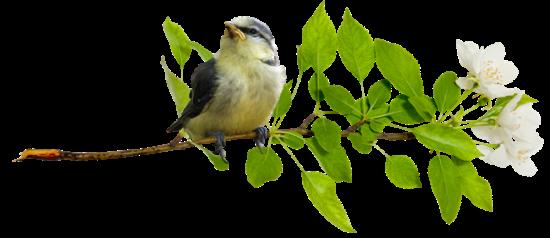 Дерево счастья своими руками - пошаговая инструкция (35 офто) 10