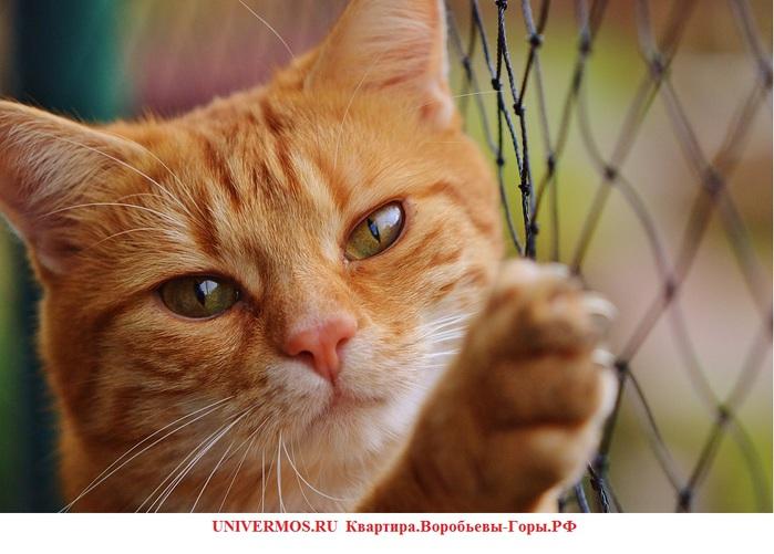 Кошки Коты Фотография сайта UNIVERMOS.RU  Квартира.Воробьевы-Горы.РФ/5957278_cat (700x501, 106Kb)