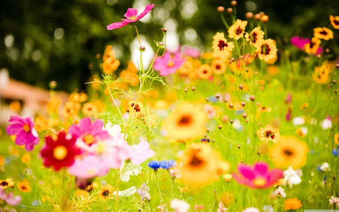 flowers_soustons_france-wallpaper-3840x2400 (700x437, 123Kb)