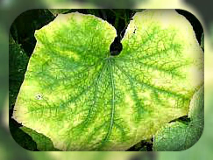 листья (700x526, 324Kb)