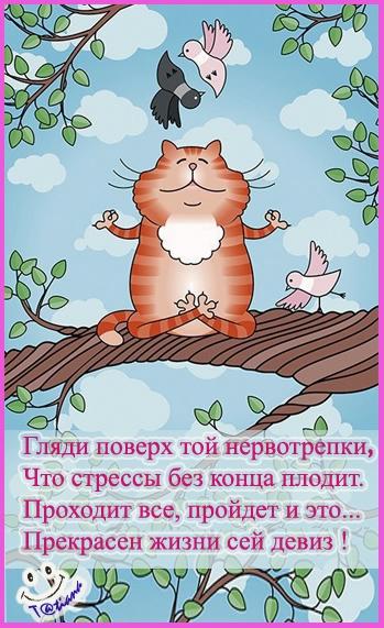 кот (349x571, 221Kb)