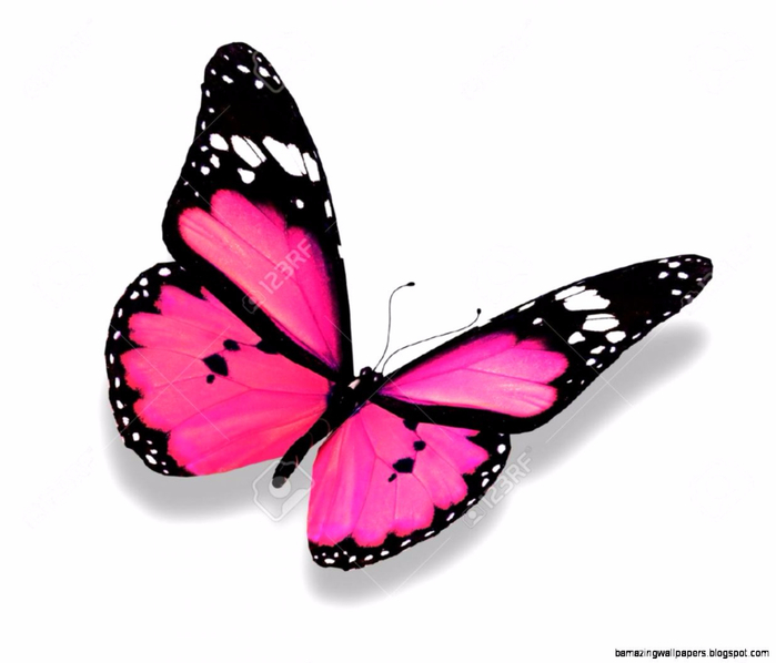 pink-butterfly-stock-photos-images-royalty-free-pink-butterfly (700x598, 178Kb)