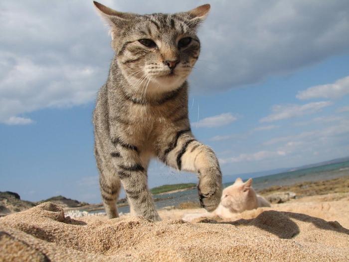 кошачий пляж на сардинии 2 (700x525, 337Kb)