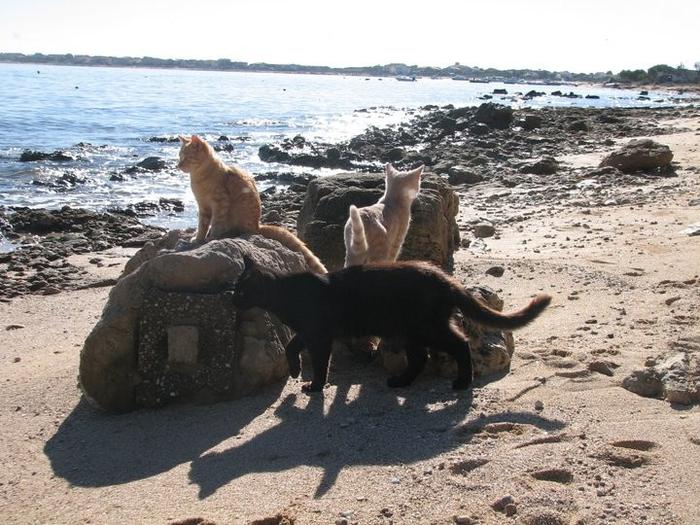 кошачий пляж на сардинии 5 (700x525, 387Kb)