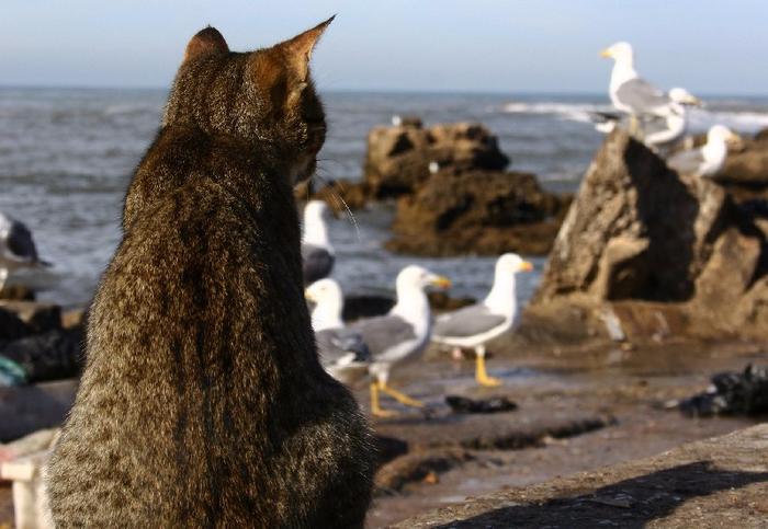 кошачий пляж на сардинии 8 (700x483, 346Kb)