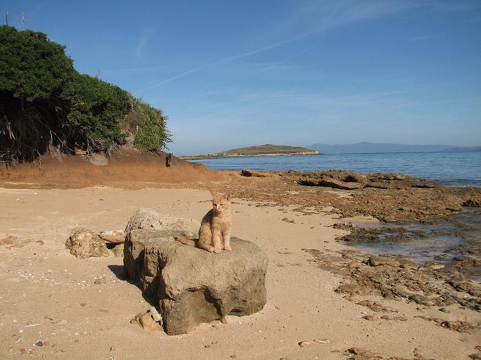 кошачий пляж на сардинии 10 (700x525, 452Kb)